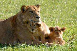 Les attractions « nature » en famille